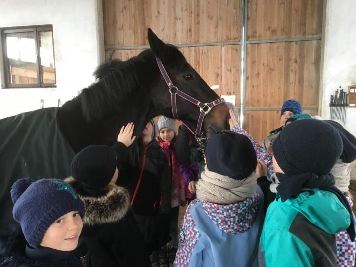 Kinder treffen Pferde